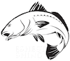 Freshest Fishing